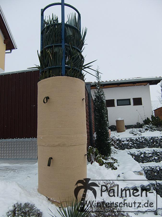 Winterschutzaufbau an der Trachycarpus