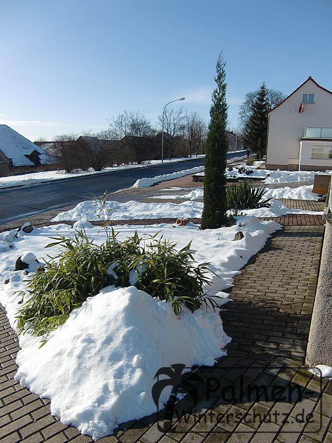 Bambus versinkt im zusammengeschobenen Schnee.